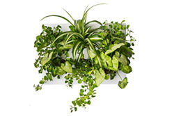 Home Indoor Vertical Garden Contains 1 White Planter Unit Design Your Own Living