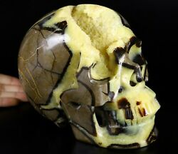 Giant 8.1 Dragon Septarian Geode Stone Carved Crystal Skull, Realistic 287