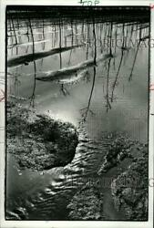 LARGE 1978 Press Photo Young nursery trees in snow melt water SSA30933
