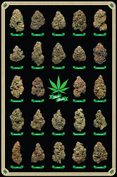 Best Buds Poster 24x36 With Choice of Rolled Frame or Plaque