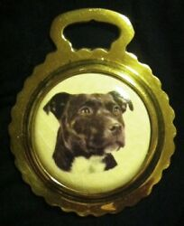 NEW DOG STAFFORDSHIRE BULL TERRIER Ceramic Horse Brass STAFFIE!  WOW YOUR WALLS!