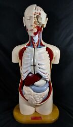 """Denoyer-geppert Advanced Knowbody Human Torso. Autographed + Dated 1994. 35""""t"""