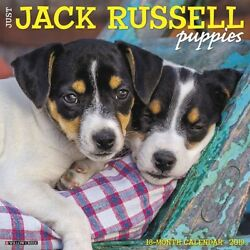 2019 Jack Russell Puppies Wall Calendar Jack Russell Terrier by Willow Creek Pr