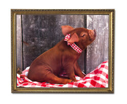 Red Pig On Checkered Board Blanket Kitchen Wall Picture Gold Framed Art Print