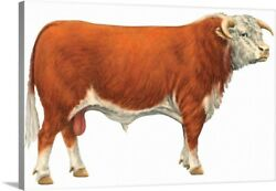Hereford Bull, Beef Cattle Canvas Wall Art Print, Cow Home Decor