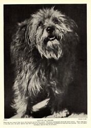1930s Antique BASSET GRIFFON de VENDEEN Dog Print 3283 L