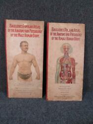 Antique Bailliereand039s 1908 And 1914 Popular Atlas Of Male And Female Anatomy H.biss