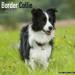 Border Collie Calendar 2021 Premium Dog Breed Calendars