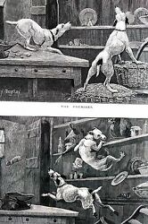 Berkley DOGS Chase Mouse MISCHIEF and CONSEQUENCES 1886 Antique Matted Print