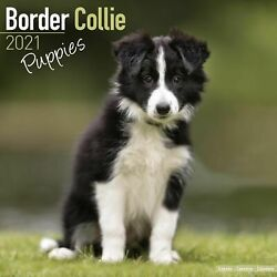 Border Collie Puppies Calendar 2021 Premium Dog Breed Calendars