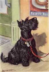Scottish Terrier - MATTED Dog Art Print - German  NEW U
