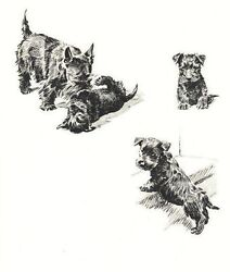 Scottish Terrier - Dog Art Print - M. Dennis