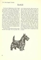 The Scottish Terrier - Vintage Dog Art Print - Matted