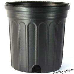 1 Gallon Nursery Pot Qty.50 Black Trade Gallon 6.5 Inch