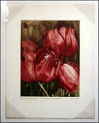 G H Rothe Some Of 48 Tulips Original Mezzotint Etching Signed Submit Offer