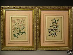 Pair William Smith 1840 Floral Prints Phlox And Correa