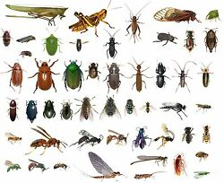 50 Dead Bugs Entomology Class Insect Bug Collection Identified All Usa Native