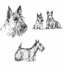 Scottish Terrier - 1963 Vintage Dog Print - Matted *