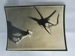 Antique Photo Printing Original White And Demilly Artistic Toy Dog Mounting