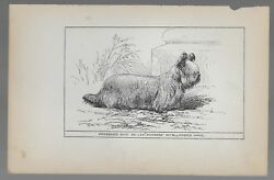 Skye Terrier Antique Engraved Dog Print Ch.
