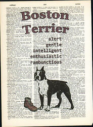 Boston Terrier Dog Traits Altered Art Print Upcycled Vintage Dictionary Page