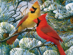 Northern Cardinal Bird Oil Painting Canvas Giclee Art Print L1926