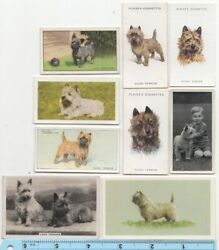 Cairn Terrier Dog Pet Canine 9 Different Vintage Ad Trade Cards #4