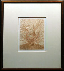 Guillaume Azoulay Willows, Caprea 1982 Paper Etching Hand Signed Submit Offer
