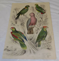 Early 1800s Antique Color Bird Prints///a Colorful Cockatoo