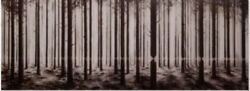 Pejac Linea Print Sold Out Signed And Numbered Of Only 200.