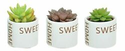 Costa Farms Mini Succulents Fully Rooted Live Indoor Plant 2-inch Growerand039s Ch...