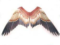 Large Hawk Wings Bird Printed Feathered Adult Costume Accessory 47
