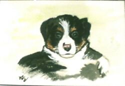 Black amp; White Border Collie puppy ACEO PRINT of Original Water Color painting
