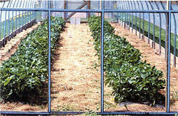 Crystal Clear 16mil Greenhouse Covering, Vinyl Glazing Eskay-lite 54 In X 55 Ft