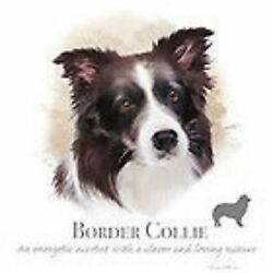 Border Collie Robinson T Shirt 7 X Large to 14 X Large Pick Size