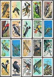 1963 Brooke Bond Canadian/american Songbirds Trading Cards Complete Set Of 48