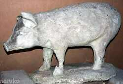 Super Life Size Trade Sign Of Pig Late 19thc Plaster From Early Butcherand039s Shop