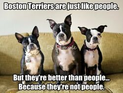 BOSTON TERRIER Better Than People Funny Magnet 3.75 x 3 inches