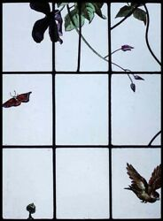 Rare Painted French Bird Butterfly And Clematis Antique Stained Glass Window