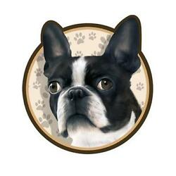 Boston Terrier Dog 3