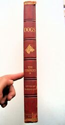 RARE 1906 1st Ed. DOGS BY WELL-KNOWN AUTHORITIES: THE TERRIER wAmazing Artwork