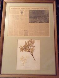 1893 Liberty Bell Pressed Flowers Souvenir Framed With Article One Of A Kind
