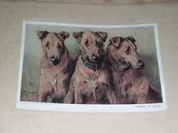 LARGE ANTIQUE IRISH TERRIER DOG PICTURE BY STRETTON 1910 LTD EDITION TERRIERS