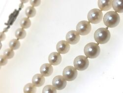 31 Sea Cultured Pearl Knotted Necklace 9ct White Gold Clasp 8mm Safety Chain