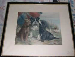 LARGE ANTIQUE SCOTTISH IRISH TERRIER BULLDOG  DOG PICTURE LILIAN CHEVIOT 1916