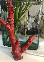 Large Antique Organic Red Bamboo Coral 9 Inch Tall 5 Inch Wide Span Beauty