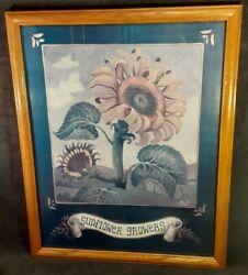 Rare Vintage Sunflower Growers Litho Framed Print 22 × 18 Collectible Art Piece
