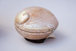 Egyptian Mother Of Pearl Abalone Shell Oval Jewelry Box With Base 6 768