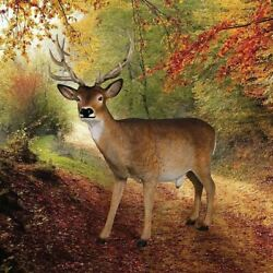 Katlot Forest White Tailed Buck Male Deer Statue