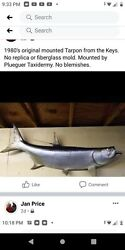 1980and039s Huge Mounted Florida Keys Tarpon. One Of A Kind. Mounted By Pflueger...